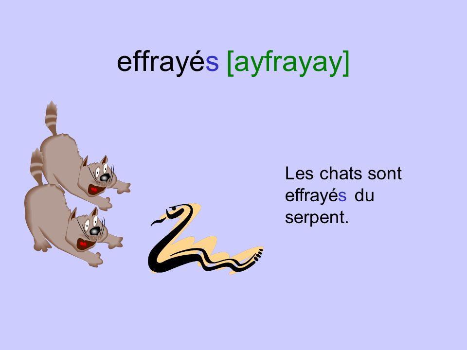 effrayés [ayfrayay] Les chats sont effrayés du serpent.